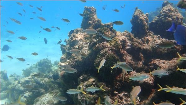Croisiere voile aux Grenadines bord de mer Fonds sous-marins