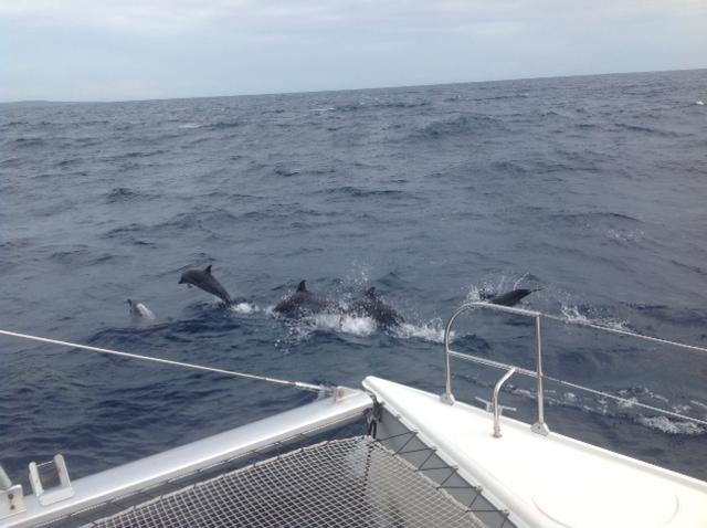 nager avec les dauphins à Cuba