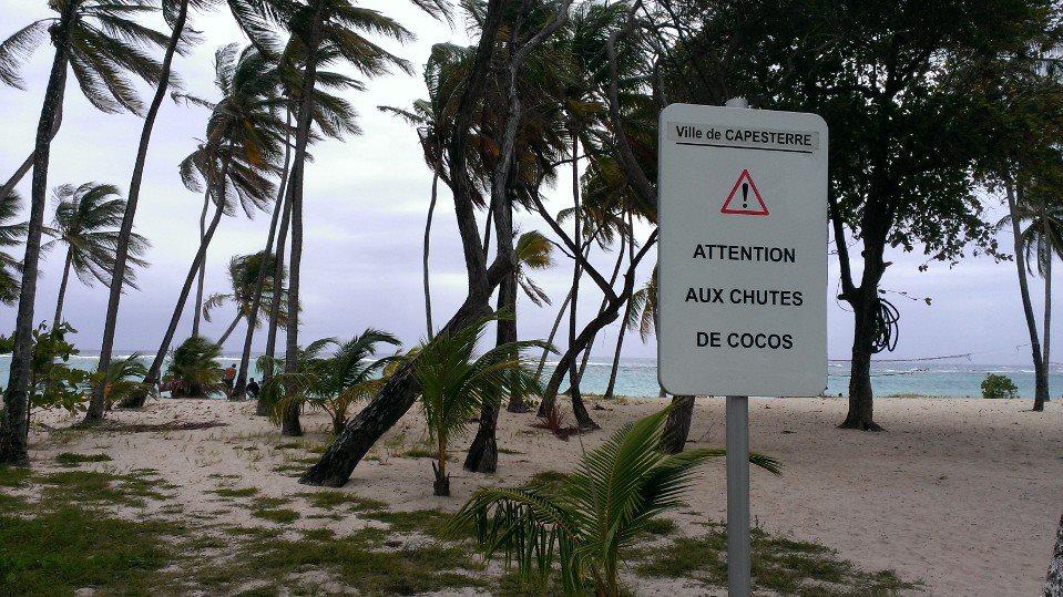 attention aux chutes de noix de coco